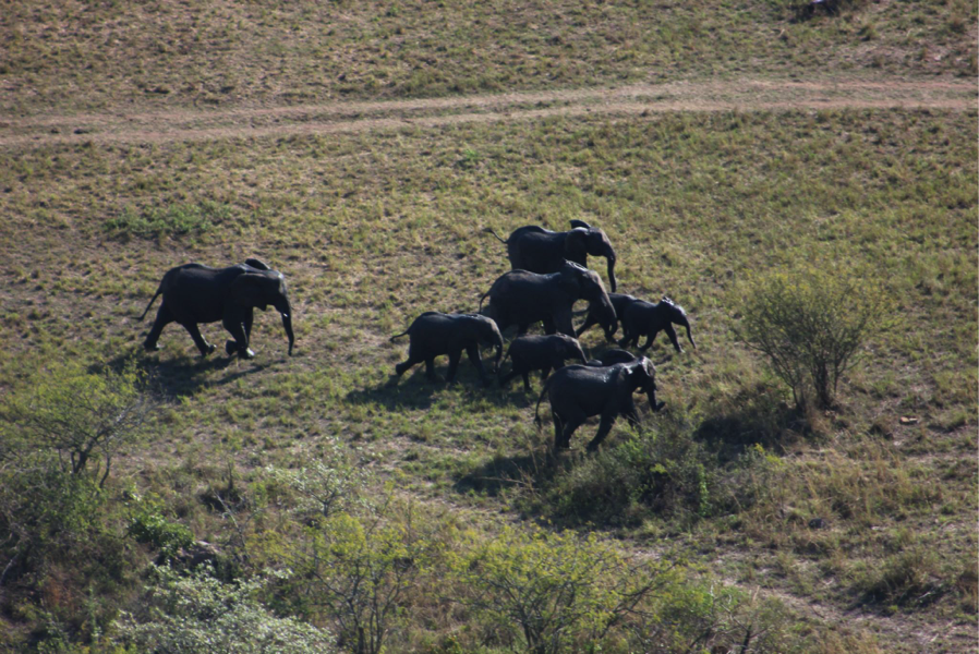 running elephants